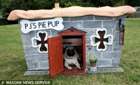 pug kennel pictured mozart the pug who lives in his own pie shaped pub daily mail