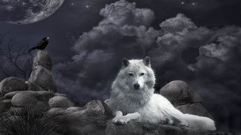 9 best images about wolf lone wolf wallpaper 183