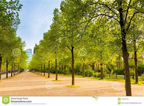 trees in germany tiergarten view with rows of trees in berlin stock photo