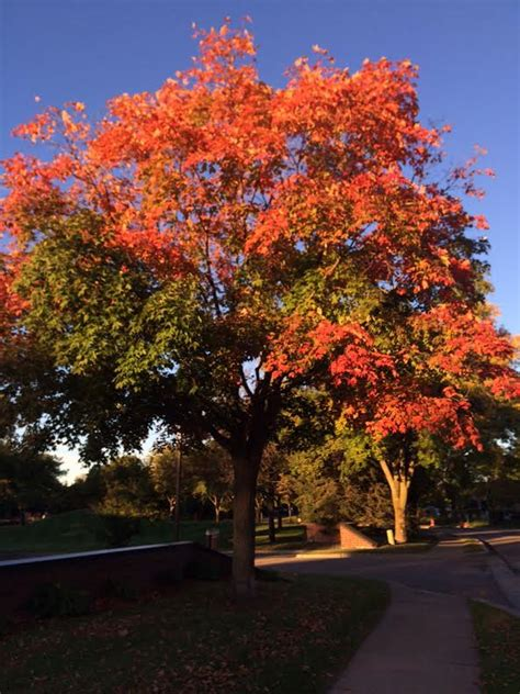 mn dnr fall colors paul douglas st cloud times forecast continued cool