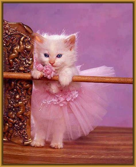 imagenes de gatitos blancas tiernas gatitas tiernas imagui