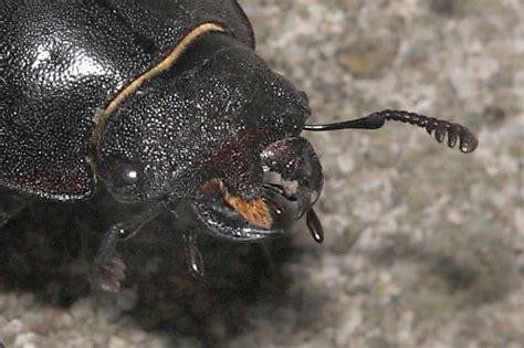 heuschrecken in der wohnung freies lehrbuch biologie 01 08 insekten