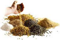 Vitamin Untuk Anak Ayam Petelur bahan untuk pakan itik bermutu tips petani