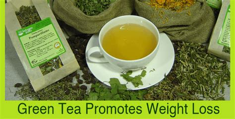 Times Promotes Green Holidays by How Green Tea Promotes Weight Loss Herbalist Times