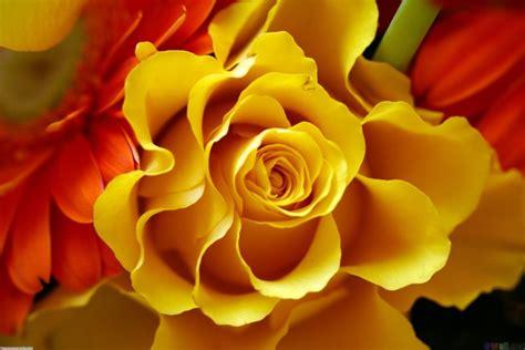 wallpaper gambar bunga cantik  laptop