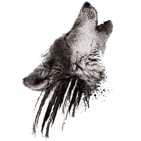 proud howling wolf head tattoo image realistic howling wolf on black smudges