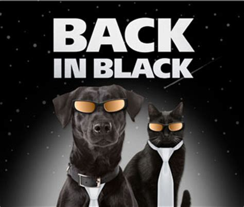 Back In Black 2 by Back In Black Caign Aims To Find Homes For Black Animals