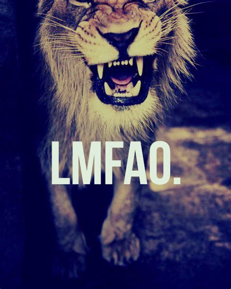 imagenes de leones swag animal dope hipster laugh image 602089 on favim com