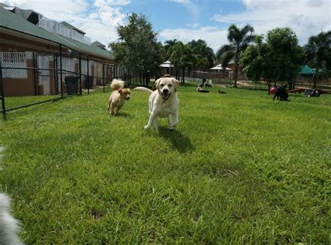 places to board dogs near me country inn pet resort animal hospital 43 photos 25 reviews pet boarding pet