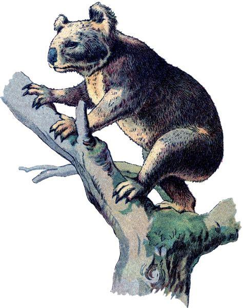 vintage koala bear image  graphics fairy