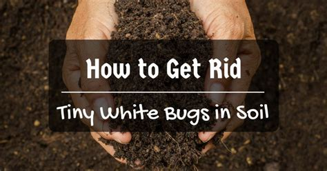 how to get rid of bugs in house plants tiny bugs on my patio modern patio outdoor