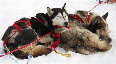 boat names after dogs meet the twin stars of the dog sled world as they compete