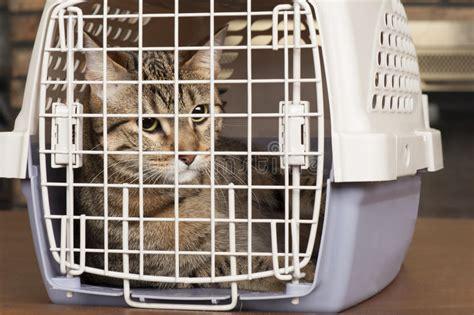 gatto in gabbia gatto in una gabbia immagine stock immagine di occhi