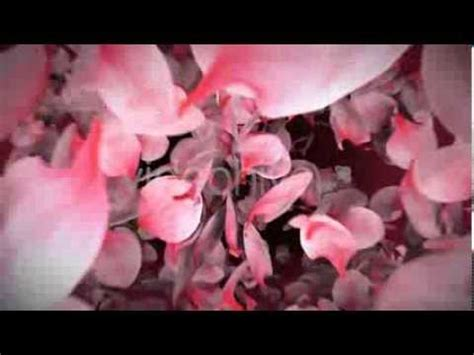 Falling Flower Petals After Effects Template Youtube Falling Flower Petals After Effects Template Free