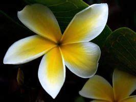 piante fiorite tutto l anno piante sole tutto il giorno deitranet