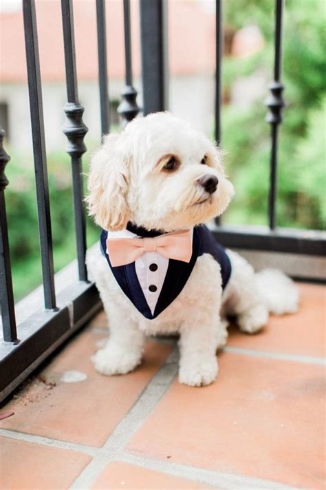 puppy tuxedo 1000 ideas about tuxedo on boy boy clothes and clothes