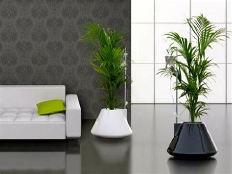 vasi da terra per interni piante per interno spunti e idee per arredare la casa con