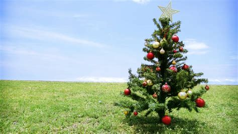 when should you put up your christmas tree bendigo