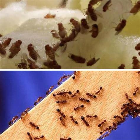 Ameisen Im Wohnzimmer Was Tun by Ameisen Im Wohnzimmer Hast Du Oder Ameisen Im