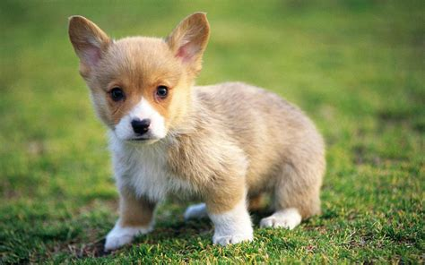 extremely puppies puppy wallpaper puppies wallpaper