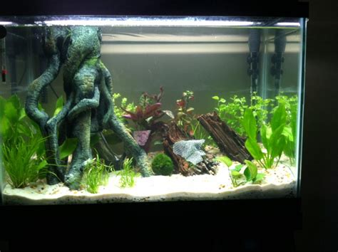 best small home aquarium 28 images freshwater fish