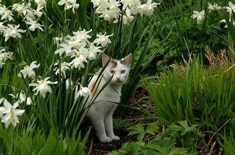keep cats in backyard how to repel cats keeping cats out of garden areas