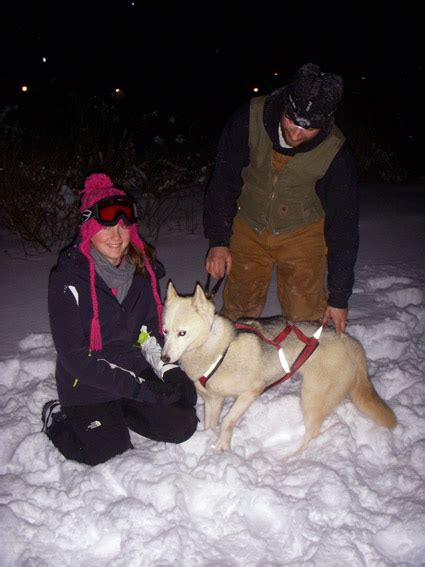 vermont puppies equestrian travel articles vermont winter sleigh rides