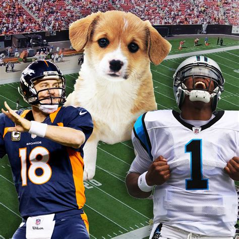 when does the puppy bowl start quot what time does the bowl start vs do you want to look