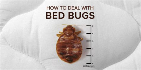 how to deal with bed bugs at your rental property