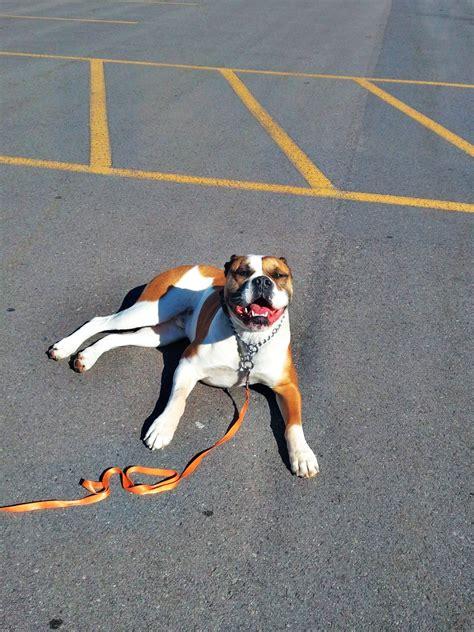 boat dog 10 hours boot c dog training utah puppy training wasatch