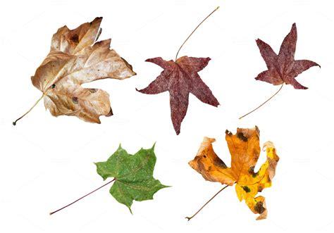 Autumn Dry Leaves ~ Nature Photos on Creative Market