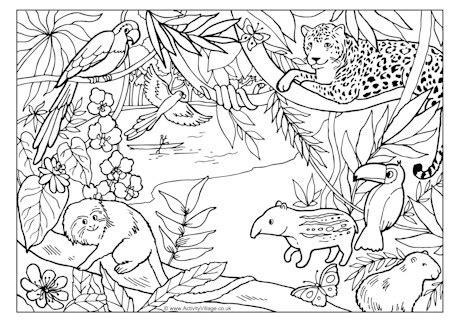 rainforest coloring pages preschool rainforest colouring page