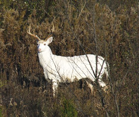 Tree Blinds What Will Come Of The Seneca Army Depot White Deer News