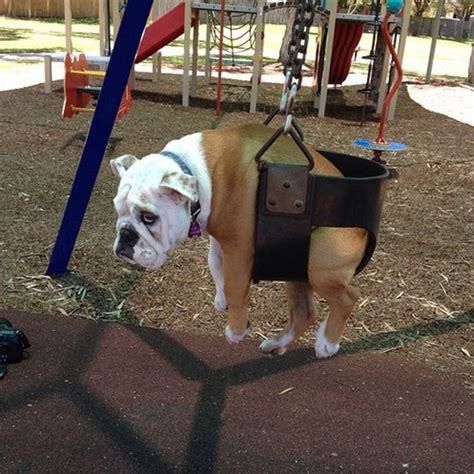 dog mood swings the last shred of his dignity has been trled on