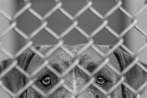 puppy shelters nyc saving shelter dogs in miami the new york times