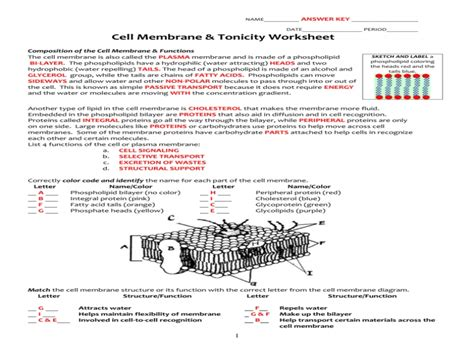 cell membrane coloring worksheet answers cell membrane tonicity worksheet free printable worksheets