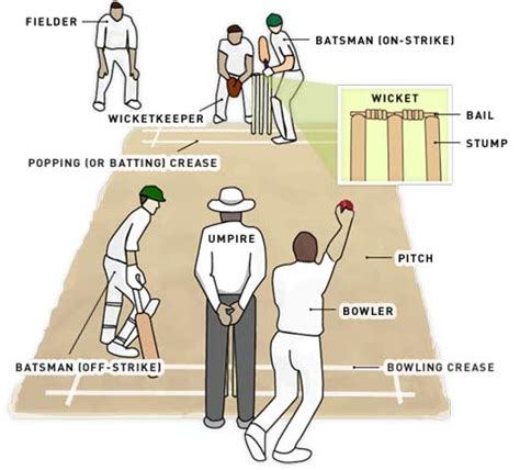 cricket anatomy diagram cricket pitch dimensions in