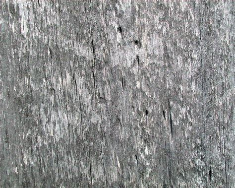 Concrete Texture File Weathered Barn Wood With Worm Holes Jpg Wikimedia