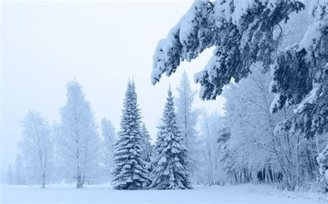 193 rboles nevados hd fondoswiki com