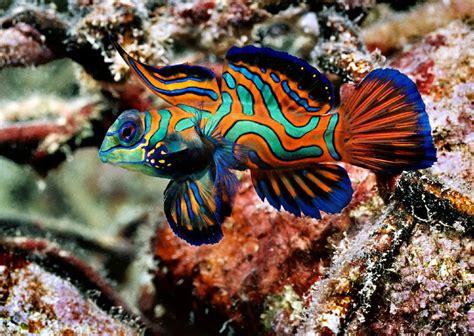 water fish salt water fish aquarium fish fish