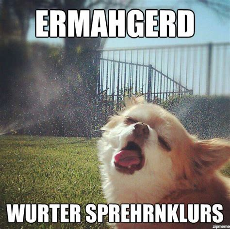 Internet Dog Meme - 10 dog memes that ll make your day rover blog