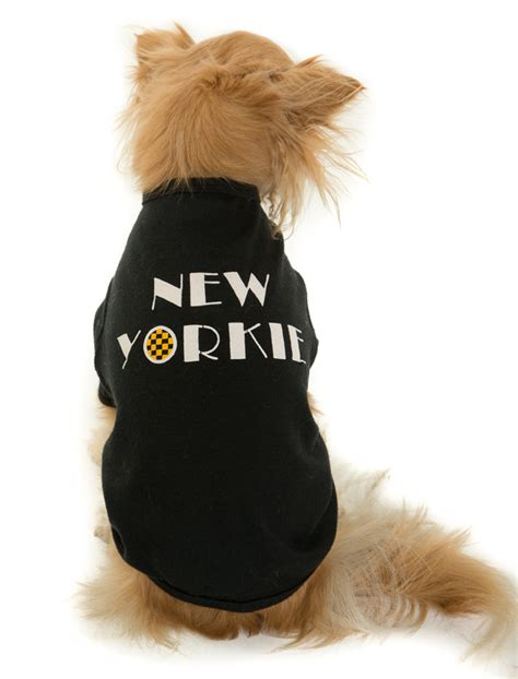 yorkie store quot new yorkie quot doggie the new yorkie store
