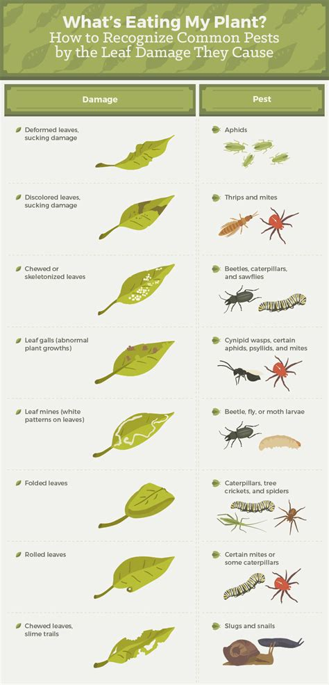 types of garden pests how to get rid of common garden pests fix