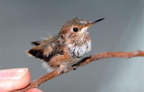 mrs yollis classroom blog our baby hummingbird is released