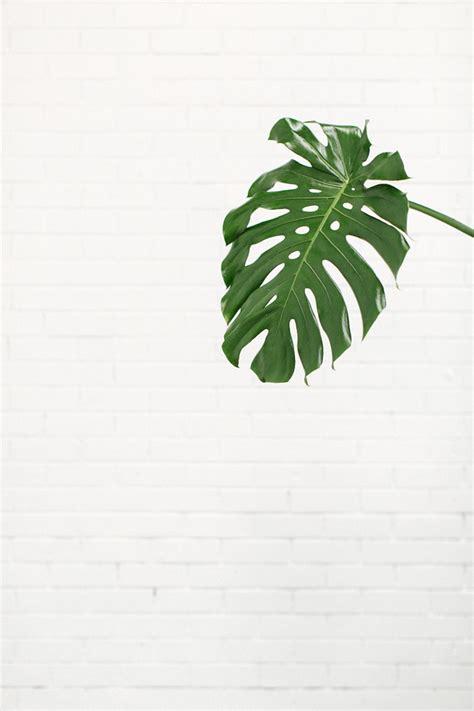 minimalist plants white minimalism inspiration pinned by birambi platiii