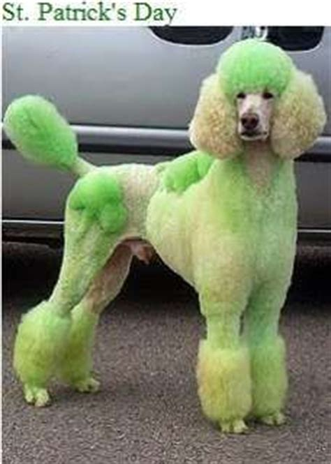 poodle with plain hair cut 483 best images about creative dog grooming on pinterest