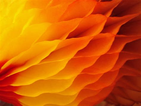 what are thanksgiving colors thanksgiving colors bunnell flickr