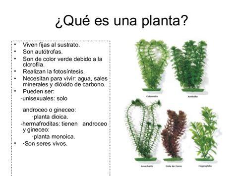 que es layout de una planta las plantas y los hongos tania