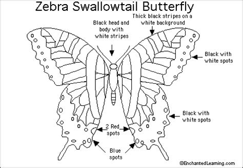 zebra butterfly coloring page zebra swallowtail butterfly printout enchantedlearning com