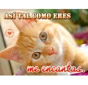 Imagenes De Gatos Enamorados Pictures To Pin On Pinterest